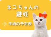 ネコちゃんの避妊